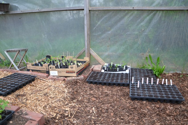 Jungpflanzen im GW